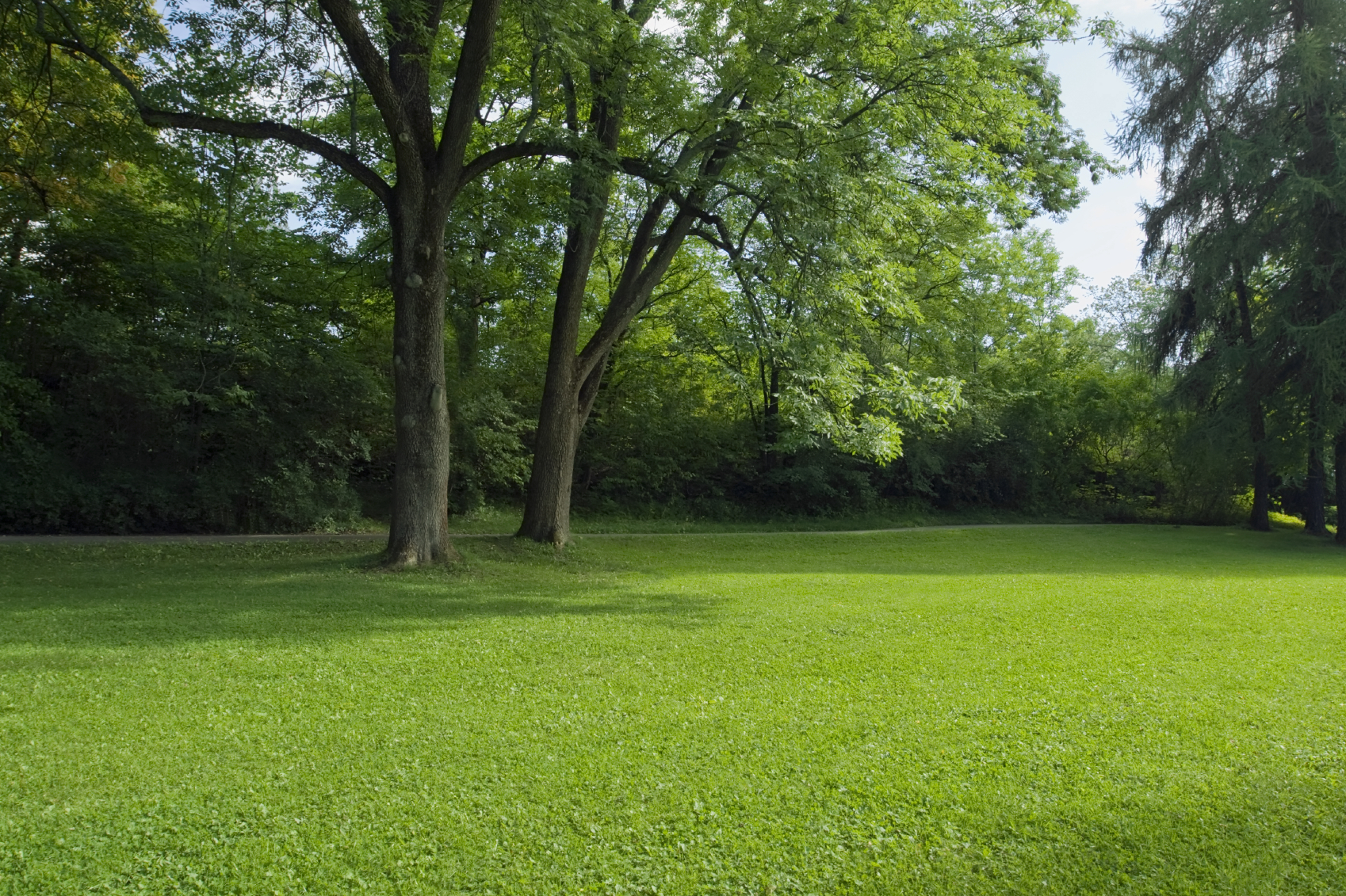 Growing grass in the shade for Lawn landscape design